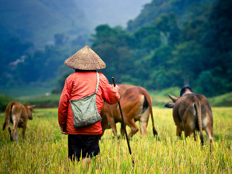 Top 10 Reasons and Best time to visit Sapa