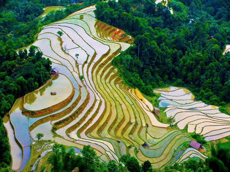 Ideal-times-and-places-to-admire-the-golden-rice-fields-in-the-North6