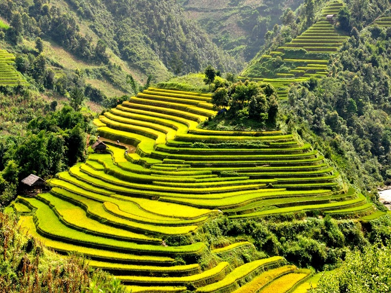 Sapa-Tours-in-Autumn-Come-to-see-the-yellow-fields1