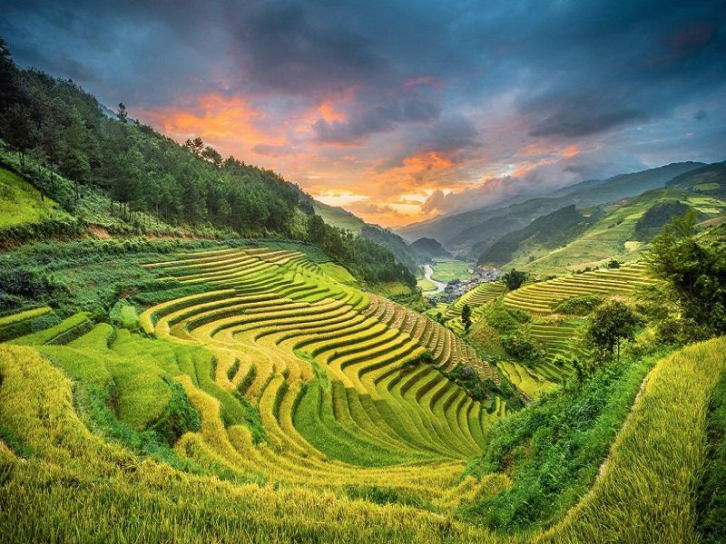 Sapa-Tours-in-Autumn-Come-to-see-the-yellow-fields2