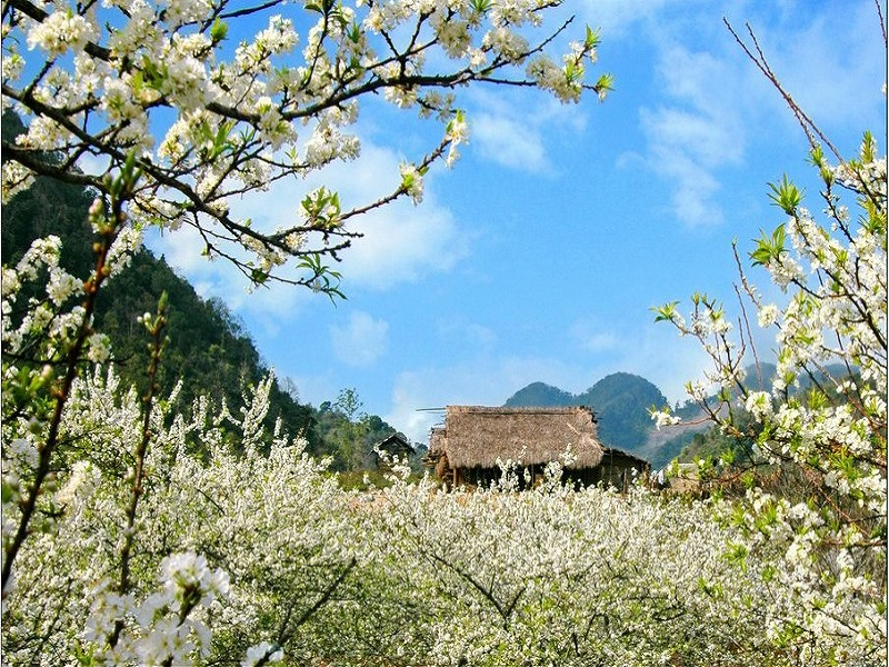 Top-4-most-beautiful-flowers-in-Sapa3