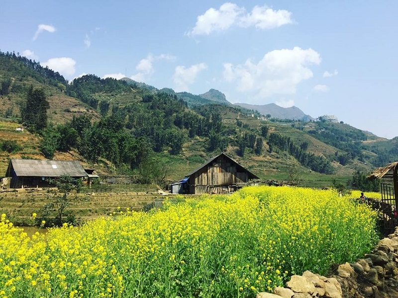 Top-4-most-beautiful-flowers-in-Sapa4